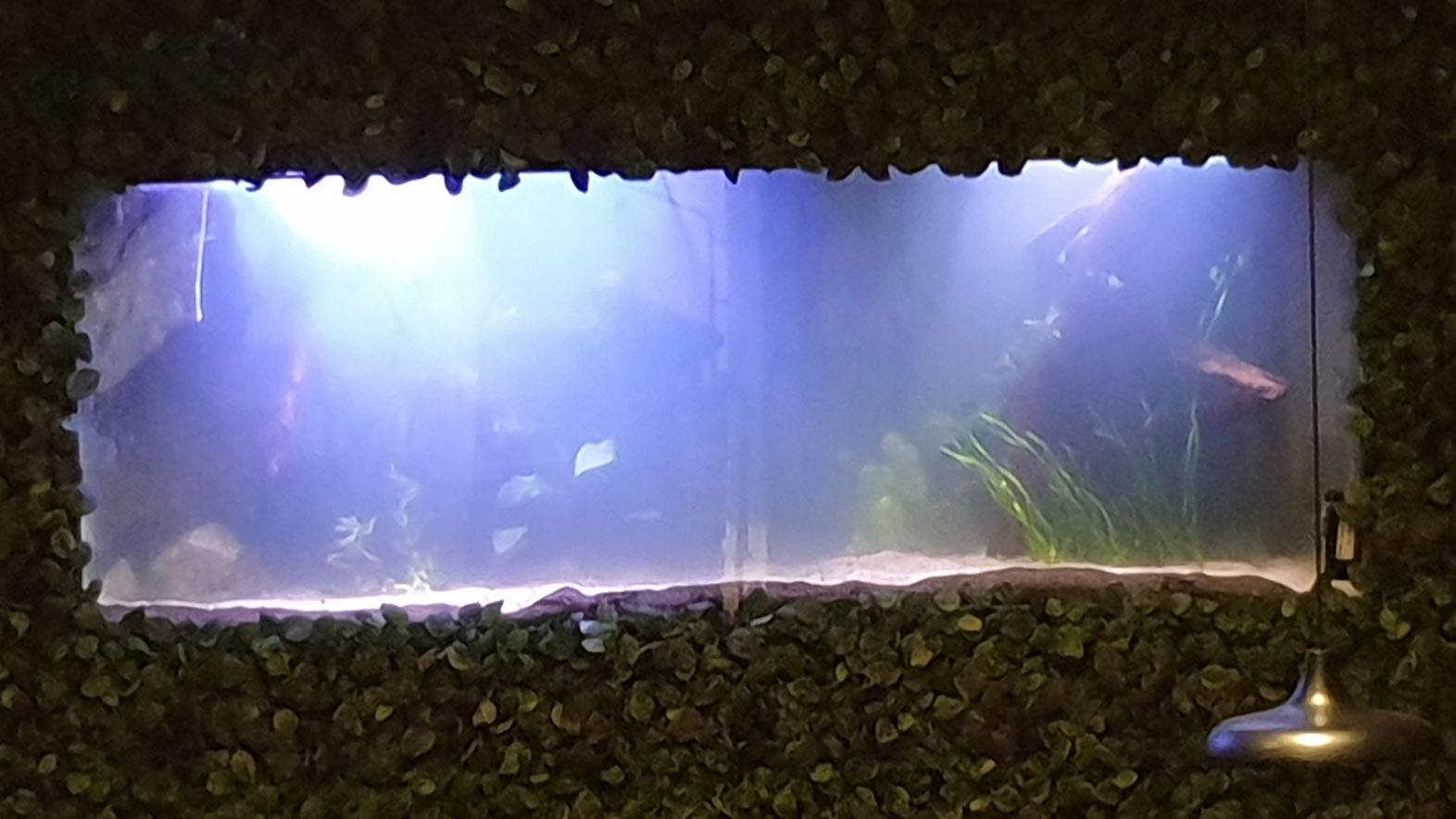 Akvarie Hötorget